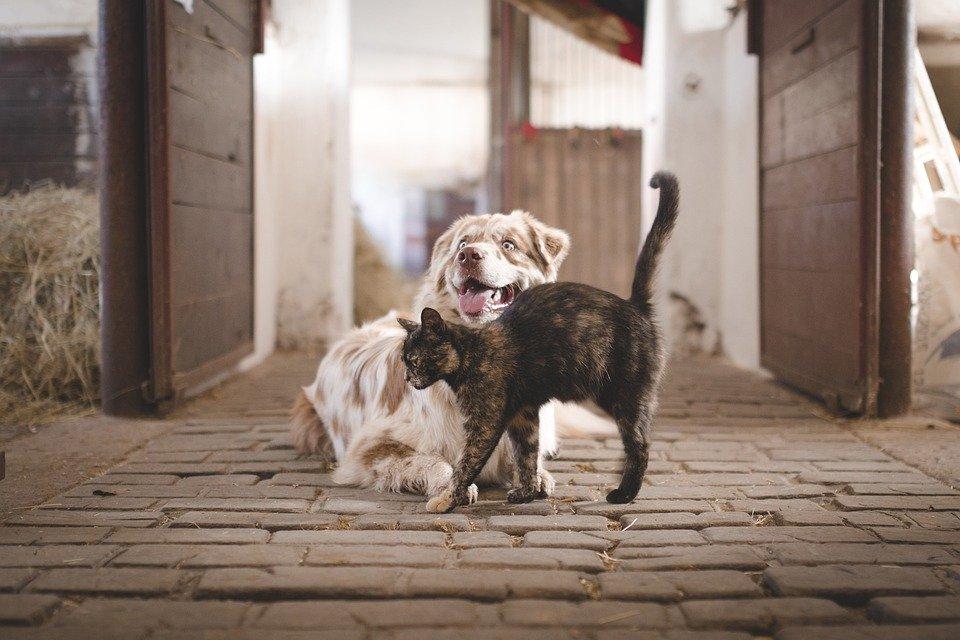 dog-5883275_960_720.jpg (102.95 Kb)