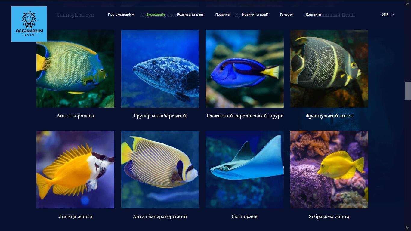okean2.jpg (232.91 Kb)